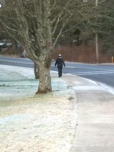 A woman walks her dog (hidden by tree) on the sidewalk by Seward Street on the SEARHC campus on Japonski Island.