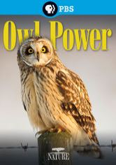 nature-owl-power_80035675